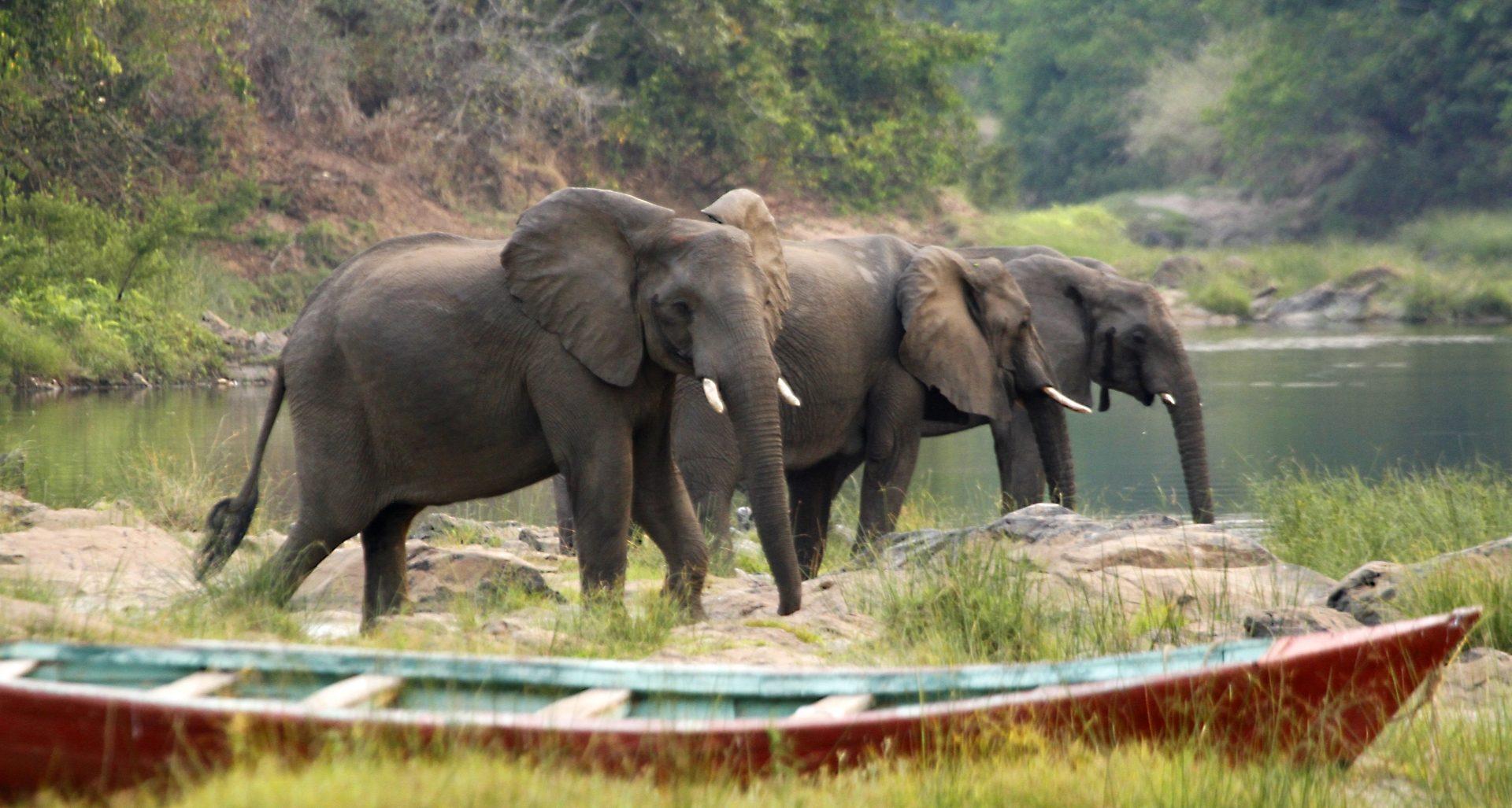 afrikanza-malawi-elephants
