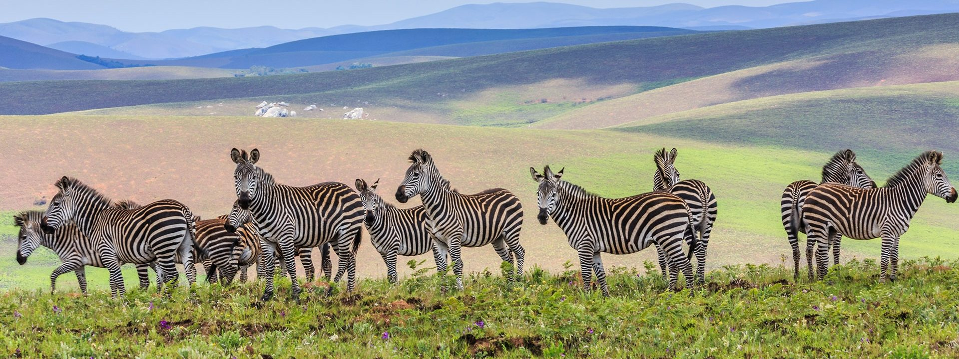 "Image result for Nyika Plateau National Park, Malawi"""